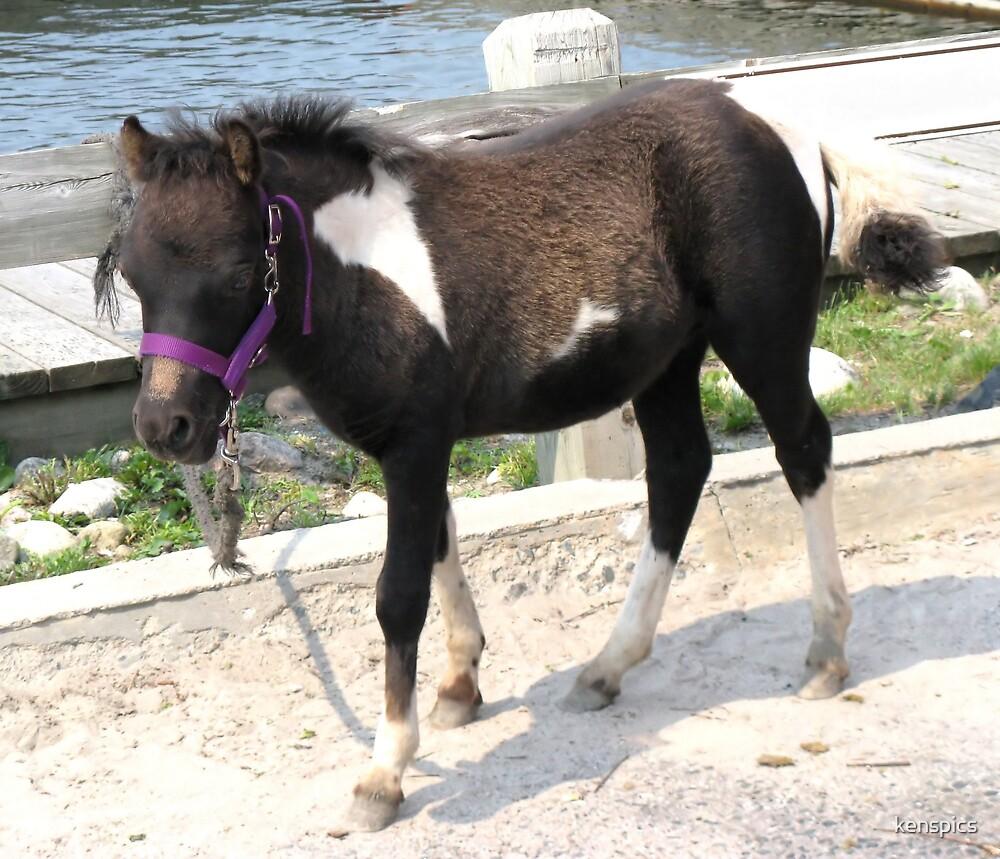 Petting Pony by kenspics