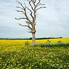 LoneTree in Rapeseed by DonMc