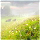 Meadow by Igor Zenin