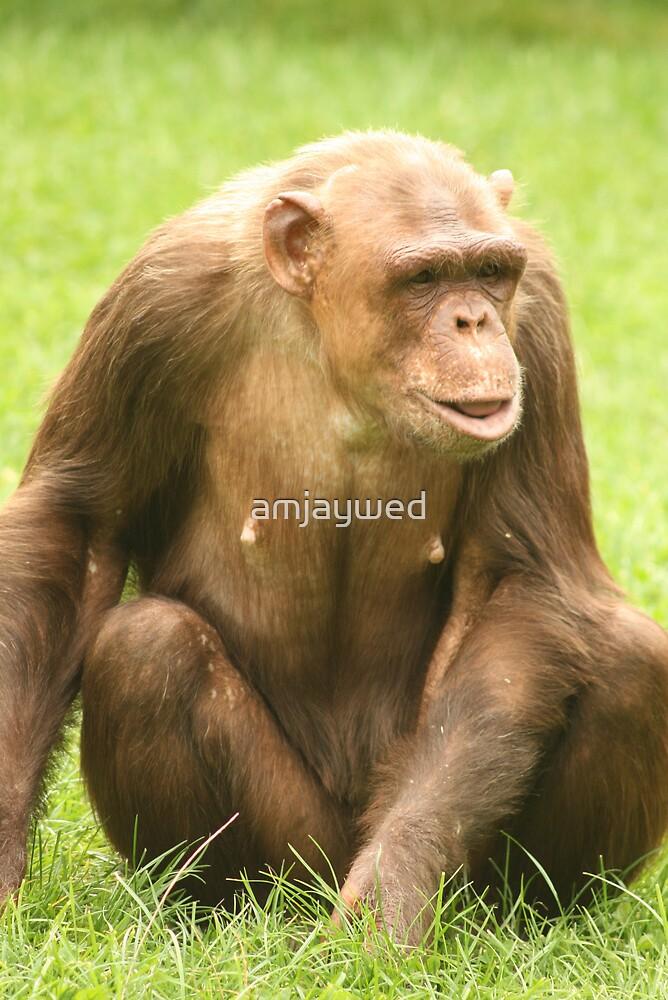 Genet - Chocolate Chimpanzee by amjaywed