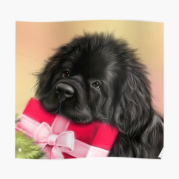 Newfie face with present  Poster