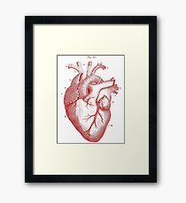anatomical heart Framed Print