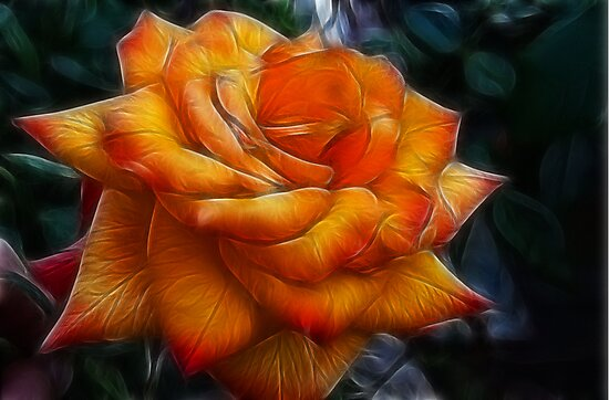 The Rose by Angi Baker