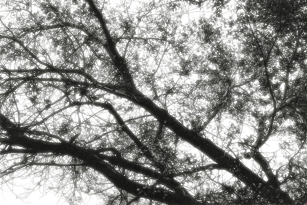 Twilight by LookCloser