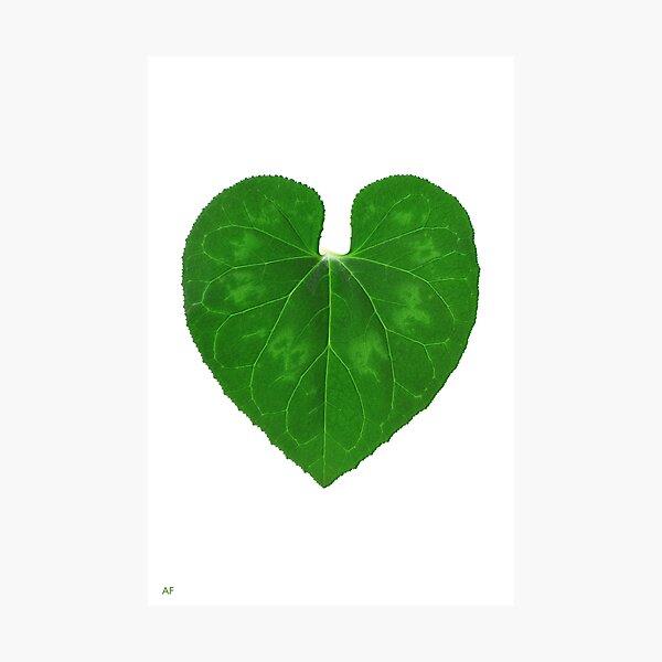 Love Heart Leaf Photographic Print