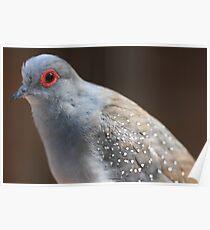 Diamond Dove Poster