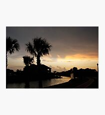 Sydney Harbour Cypress Tx. Evening Shoot - IV Shadows Photographic Print