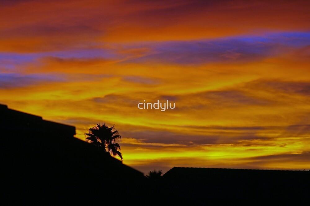 Arizona Paintbrush 3 by cindylu