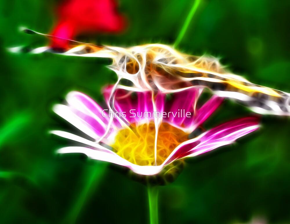 Butterfly by Chris Summerville