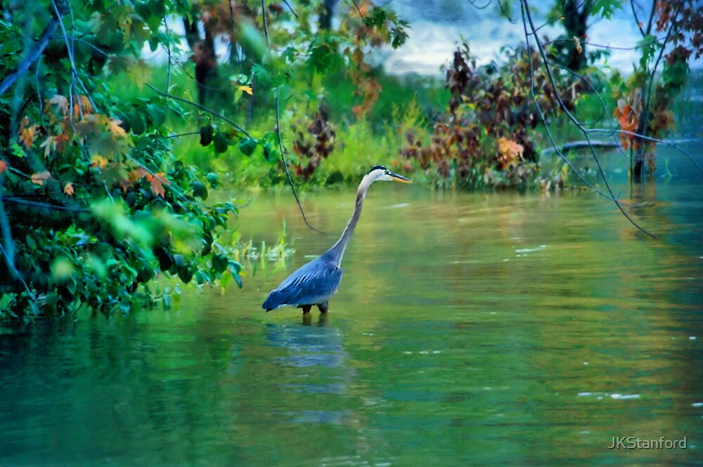 Great Blue Heron by JKStanford