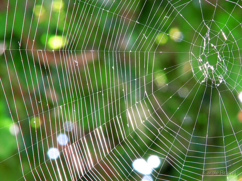Spider's web by Carole Brunet