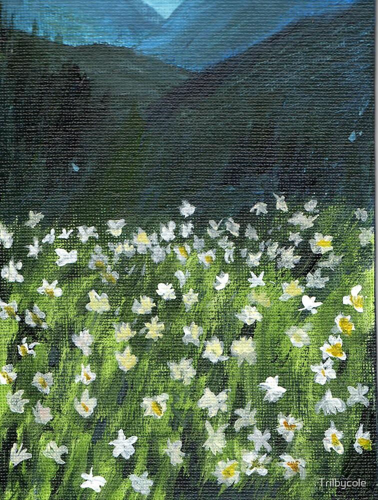 Where lilies grow by Trilbycole