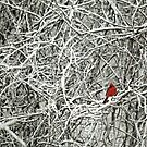 a touch of red by lucy loomis