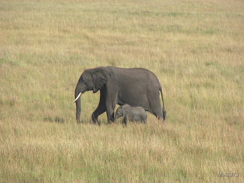 Elephant and baby, Masai Mara by Mel1973