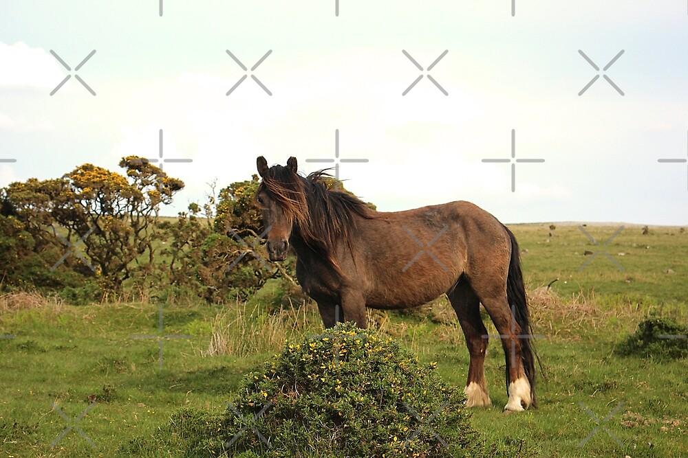 The Ridiculously Photogenic Dartmoor Pony by Martha Sherman