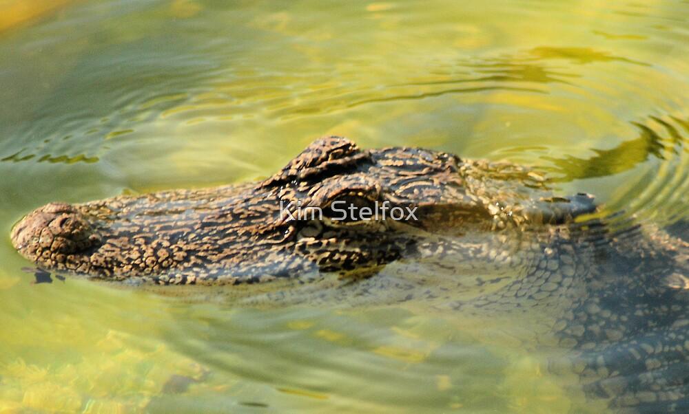 gator by Kim Stelfox