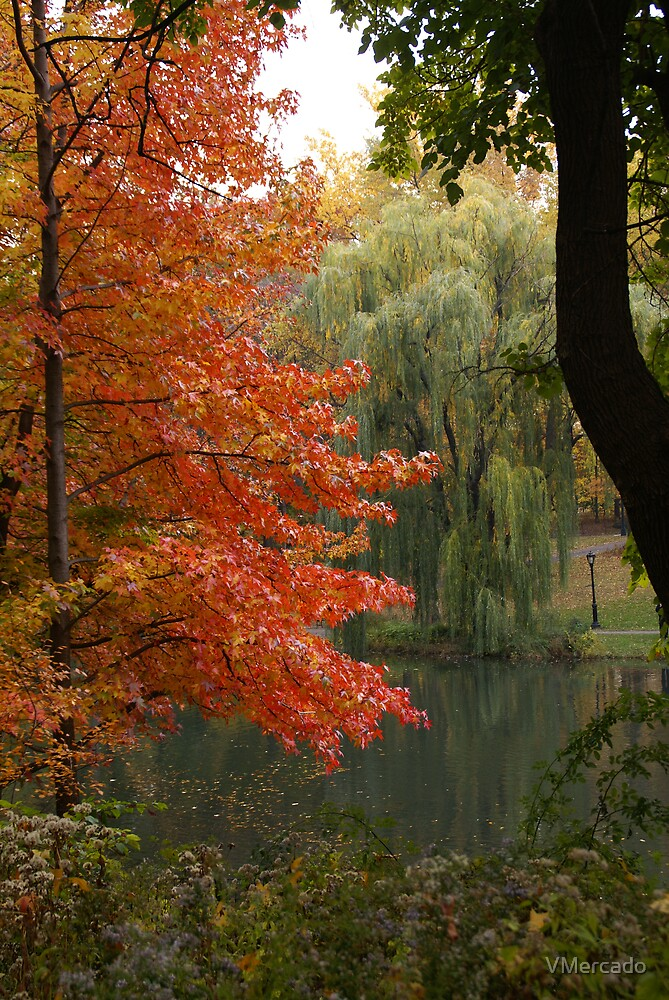 Fall in central park by VMercado