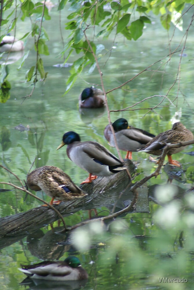 Mallards at rest by VMercado