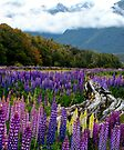 lupins by amko