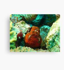 Frogfish Bonaire Canvas Print