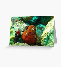 Frogfish Bonaire Greeting Card