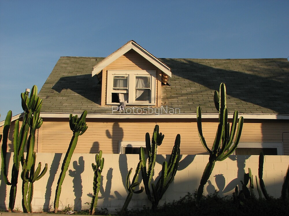Leaning Cactus As the Sun Sets by PhotosbyNan