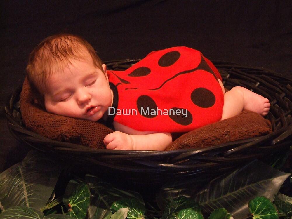 Sleepy Baby Bug by Dawn Mahaney