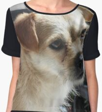 Cute Dog Women's Chiffon Top