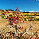 Barbed-wire autumn by MooseMan