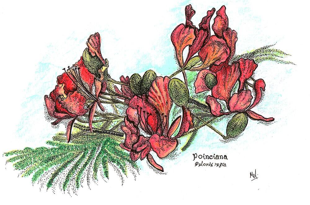 Poinciana Flowers by Melf