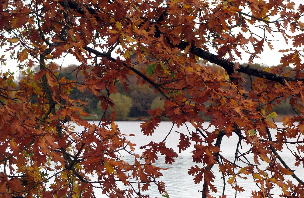 lake in autumn by Caroline Anderson