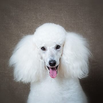 White poodle cushion by Penel