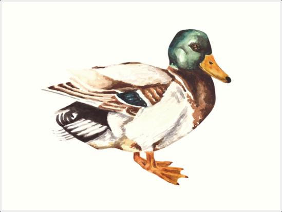 Mallard Duck Watercolor Painting by Erika Lancaster