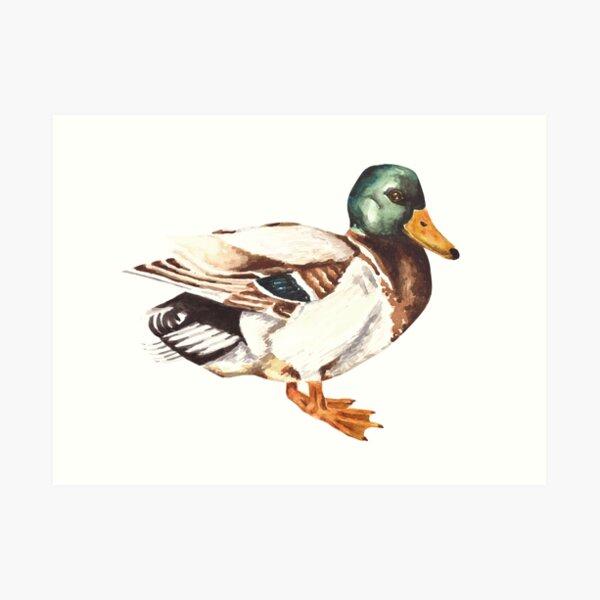 Mallard Duck Watercolor Painting Art Print