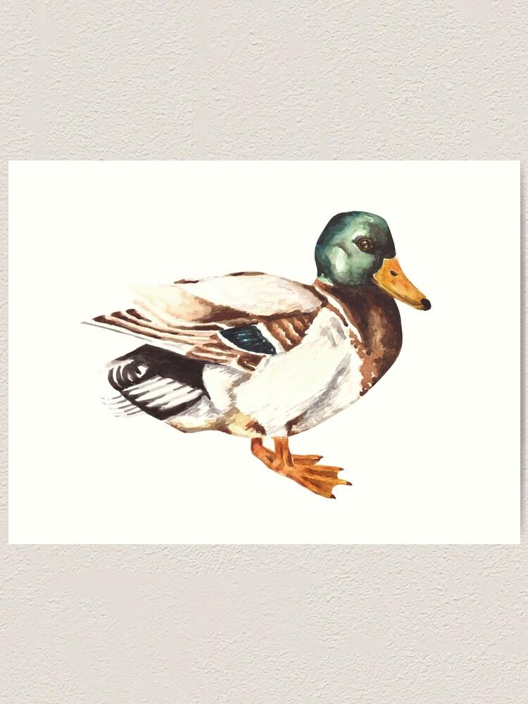 Alternate view of Mallard Duck Watercolor Painting Art Print