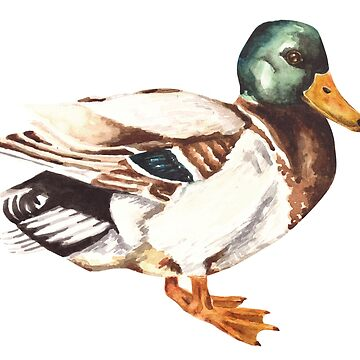 Mallard Duck Watercolor Painting by erika-lancaster