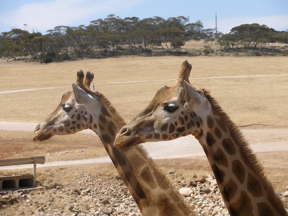 Monarto Zoo 3 by John Wood