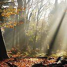 Autumnal sunbeams at Gooilust by jchanders