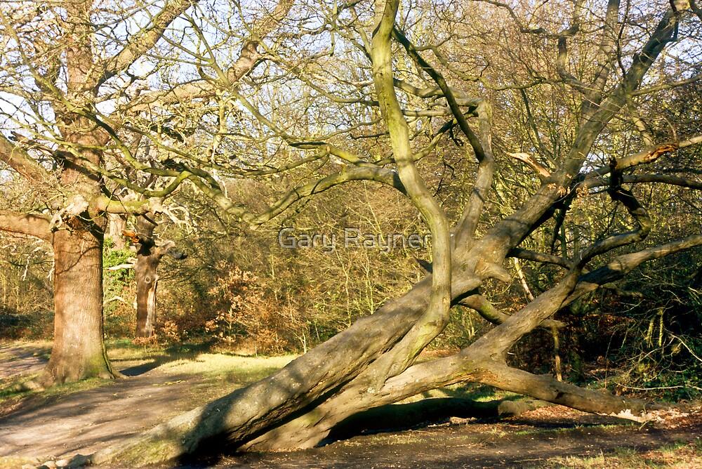 Leaning Tree, Epping, UK by Gary Rayner
