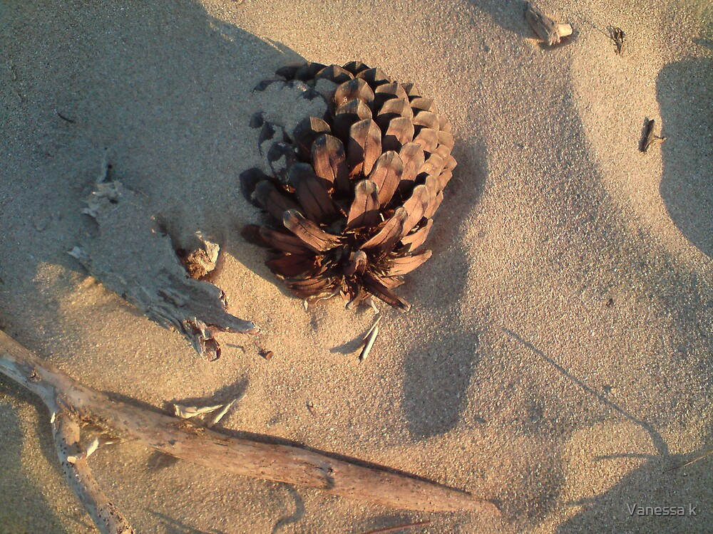 Pinecone in the sand by Vanessa k