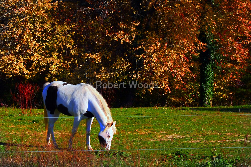 Horse in Fall Pasture by Robert Woods