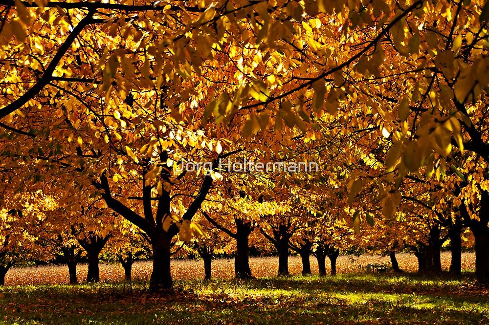 Autumn Cherry by Jörg Holtermann
