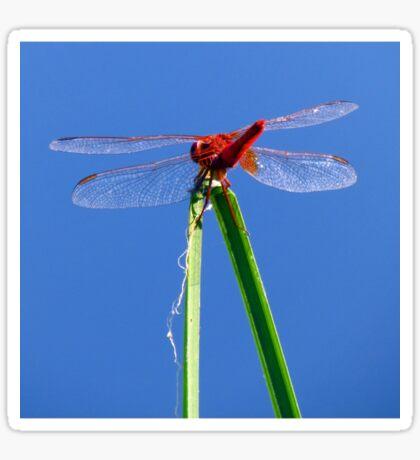 Dragonfly 3 Sticker