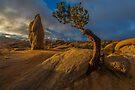 Joshua Tree Sunrise Jumbo Rocks by photosbyflood