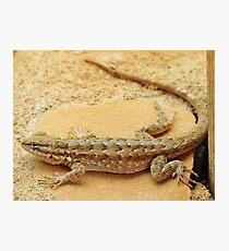 Arizona Lizard Photographic Print