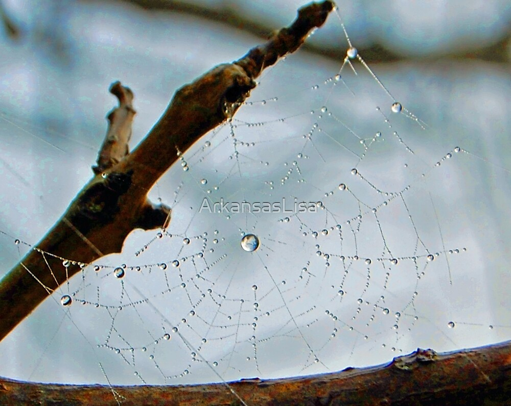 Nature's Perfection by ArkansasLisa