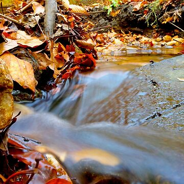 Fall Flows by jshap