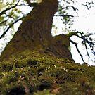 Moss by Kallian