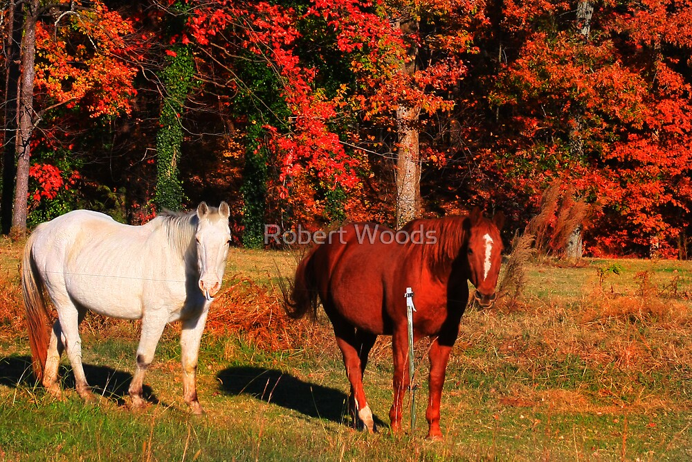Horses in Fall Setting by Robert Woods