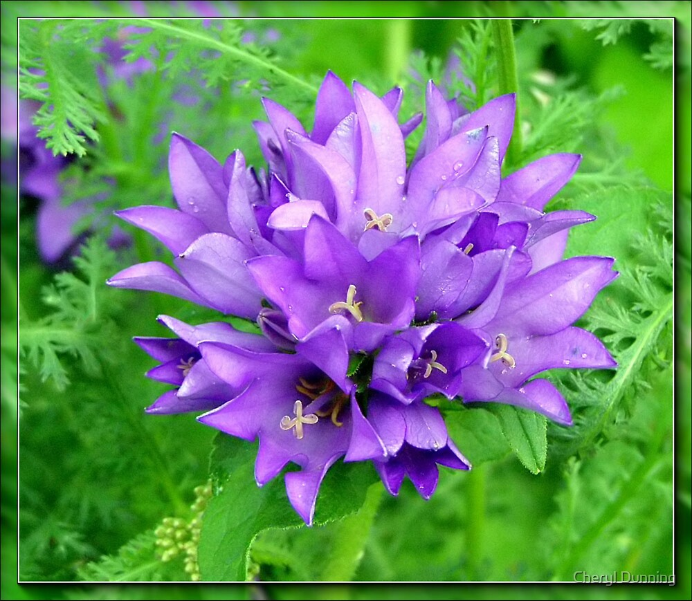 purple and green by Cheryl Dunning